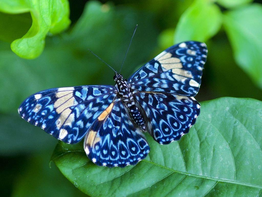 Butterfly-cats-parrots-and-butterflies-22790729-1024-768.jpg
