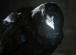 three-eyed-raven