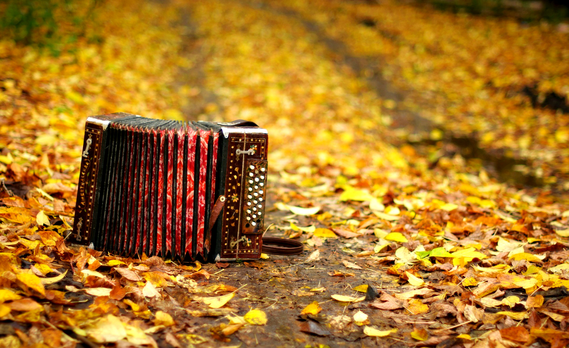 Hd Wallpaper Fall Leaf Change 1 Accordion Hd Wallpapers Backgrounds Wallpaper Abyss