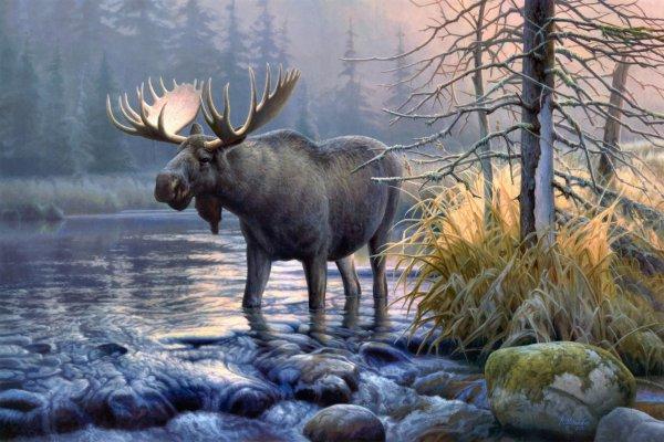 Moose Desktop Background Art