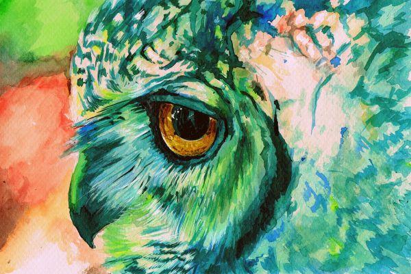 Colorful Owl Desktops
