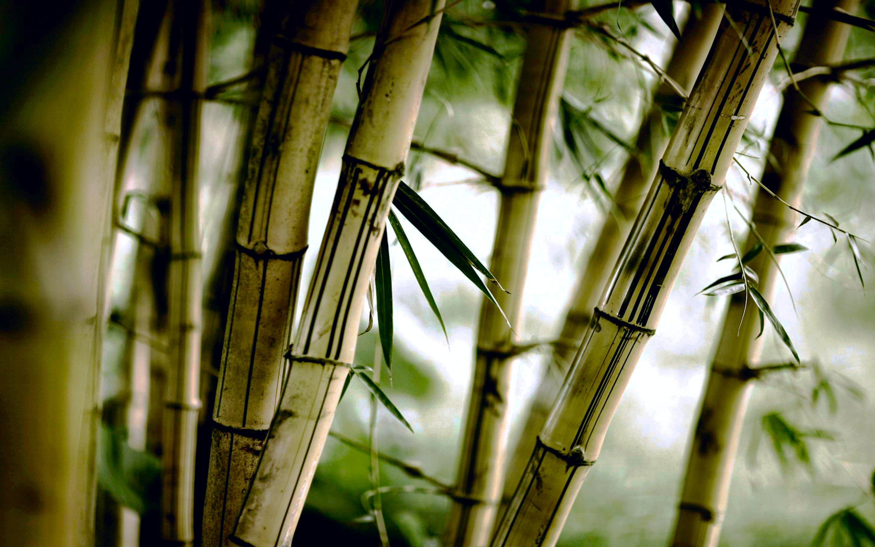 99 bamboo hd wallpapers