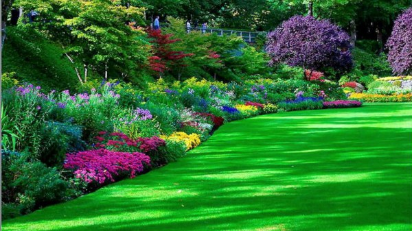 garden hd wallpapers background