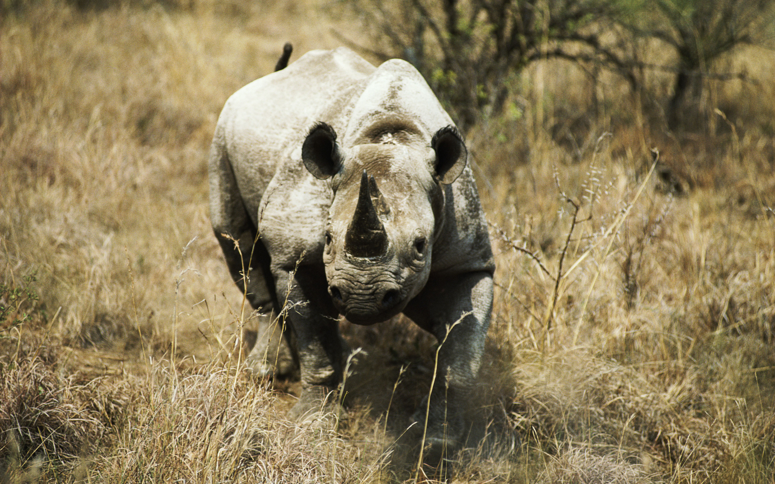 102 rhino hd wallpapers   backgrounds - wallpaper abyss