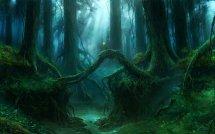 Deep Forest Hd Wallpaper Background