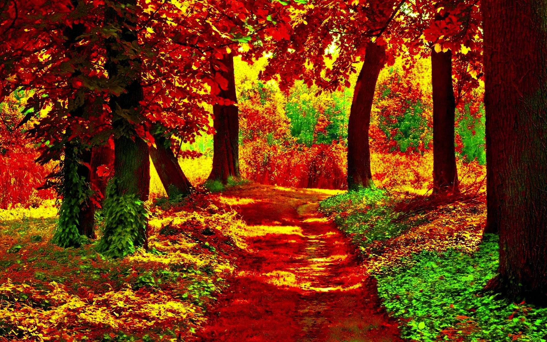 Fall Flowers Desk Background Wallpaper Path In Autumn Forest Full Hd Wallpaper And Background