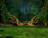 Enchanted Forest Full HD Wallpaper and Background Image