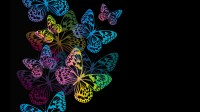 Colourful Butterfly Wallpaper Designs