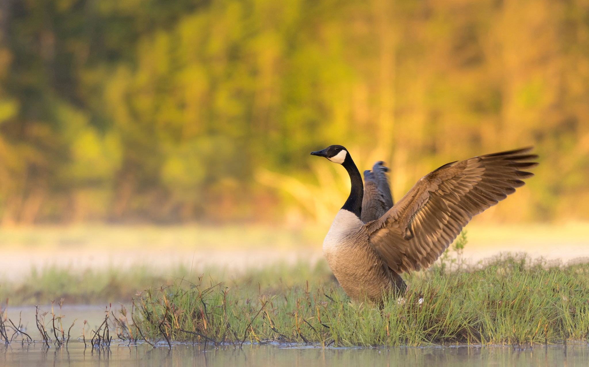 Fall Wallpaper For Large Monitors Canada Goose Hd Wallpaper Background Image 2048x1275