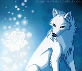wolf wolves anime rose arctic ice funny drawing background rp fanpop animated wings deviantart hd winged male looking wallpapers hate