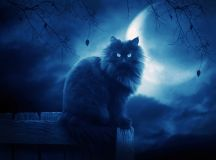black cats images Black Cat HD wallpaper and background ...