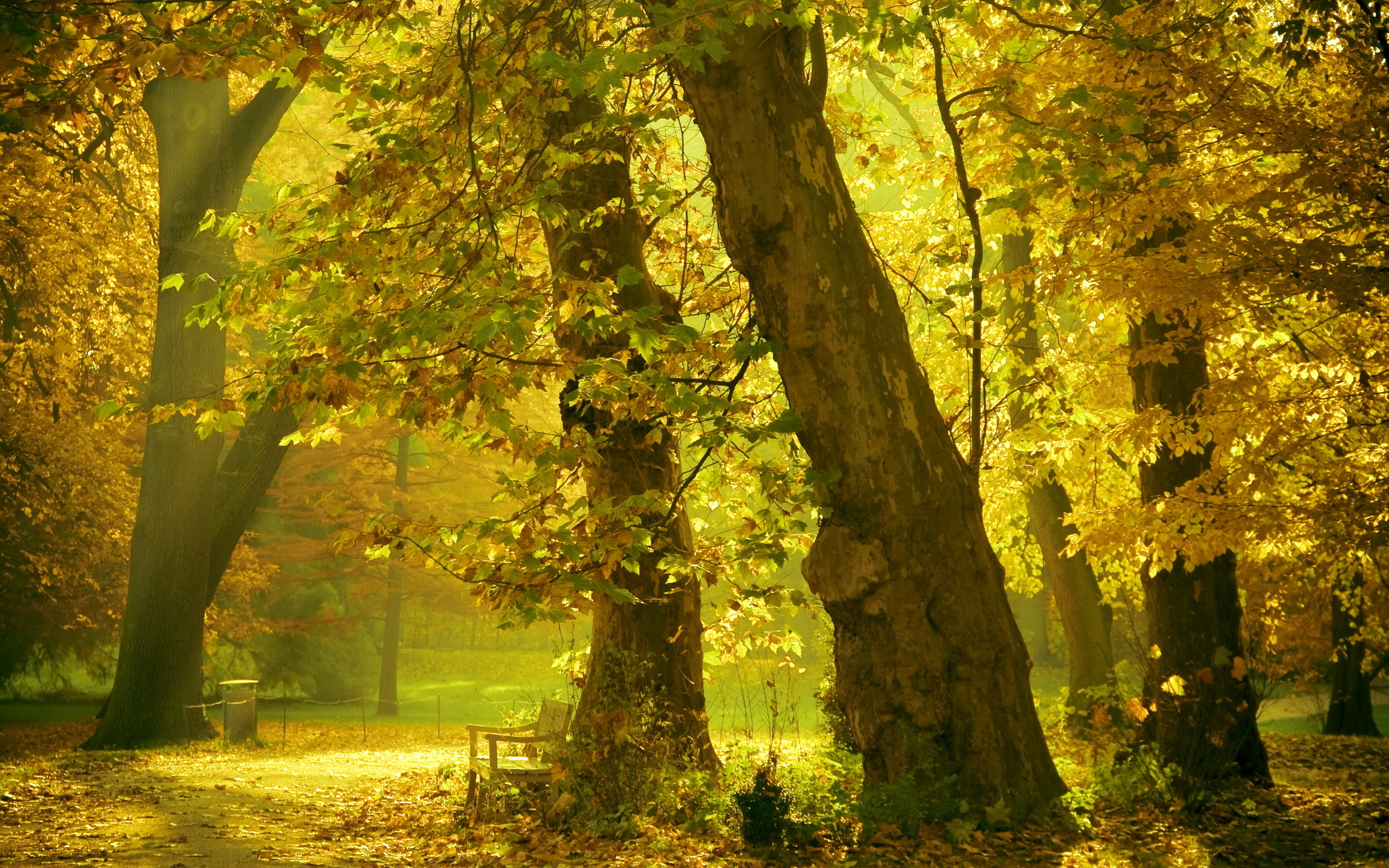 Fall Leaf Wallpaper For Mobile Fall Hd Wallpaper Background Image 2560x1600 Id