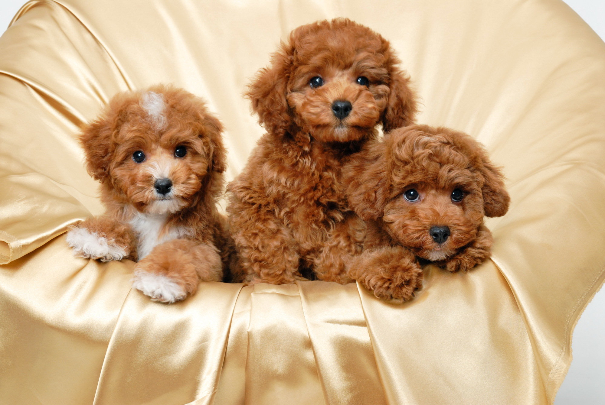 dogs full hd wallpaper and background | 2000x1340 | id:329495