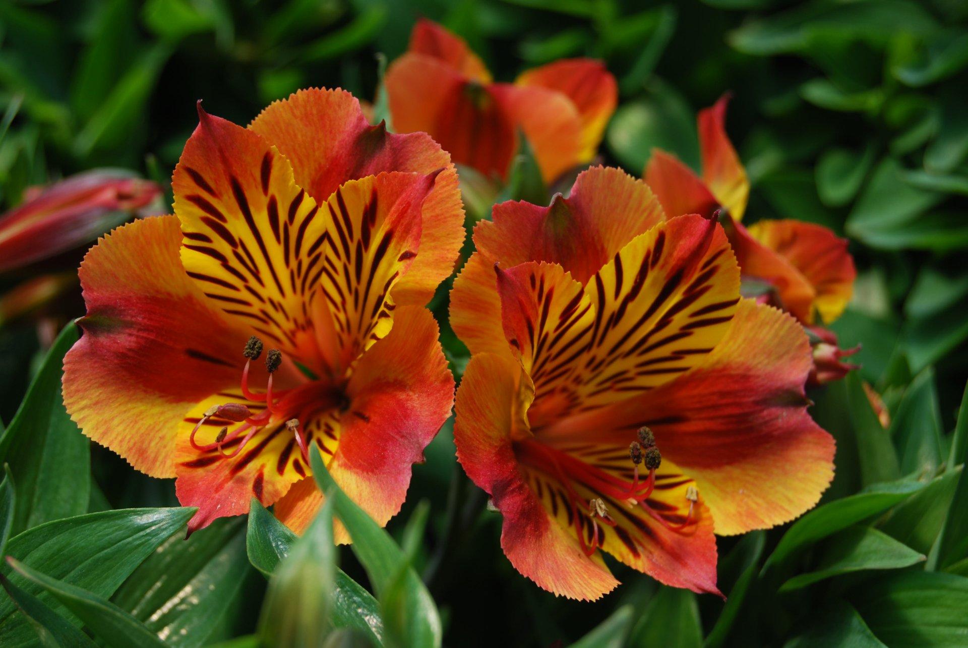 Iphone 6 Orange Flower Wallpaper Fiori 4k Ultra Hd Sfondo And Sfondi 3872x2592 Id 347111
