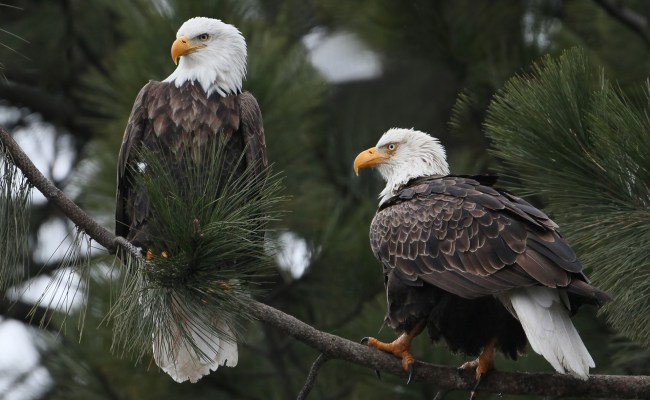 Eagle Hd Wallpaper Background Image 1920x1200 Id