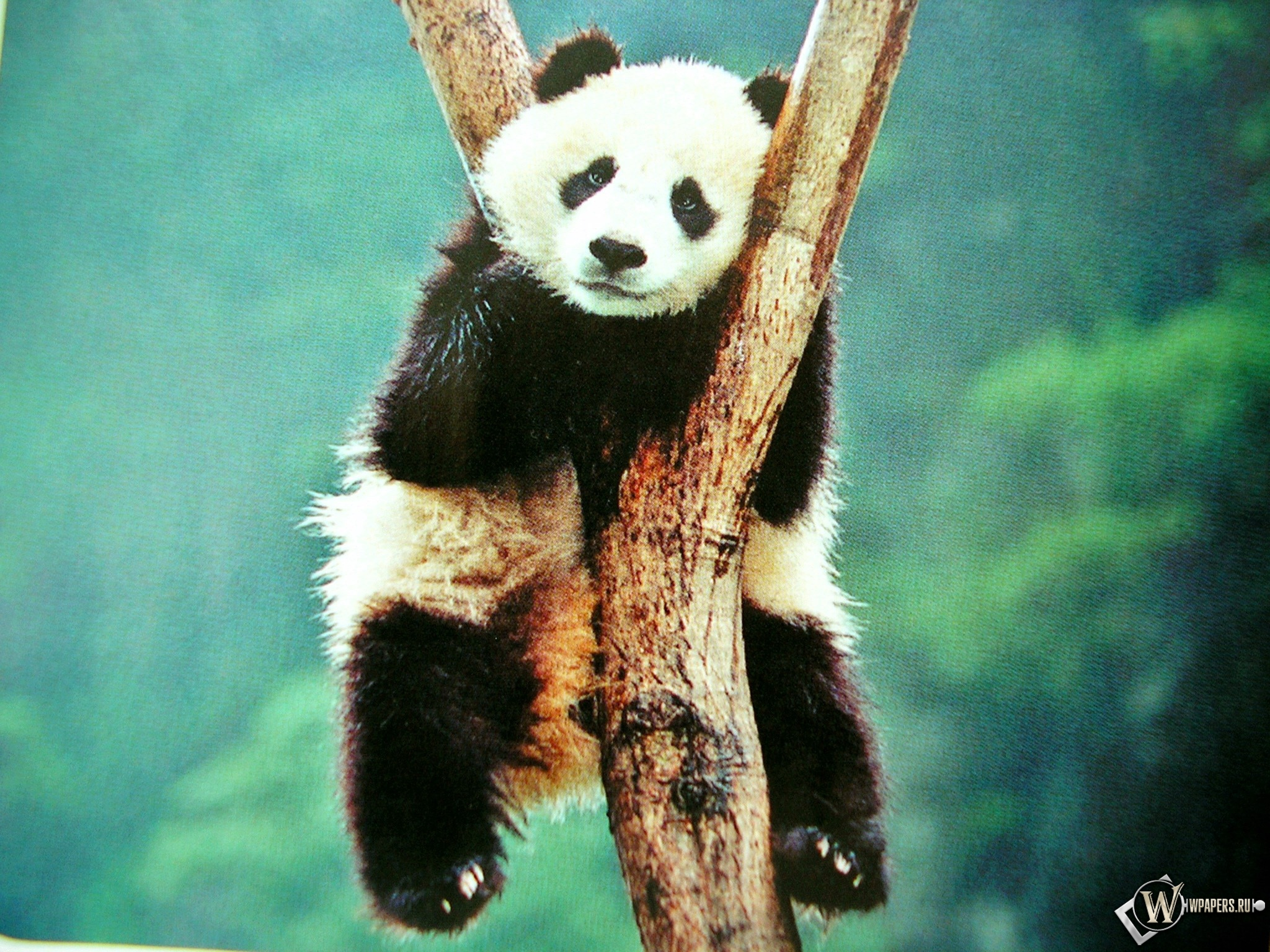 Cool Panda Stuff