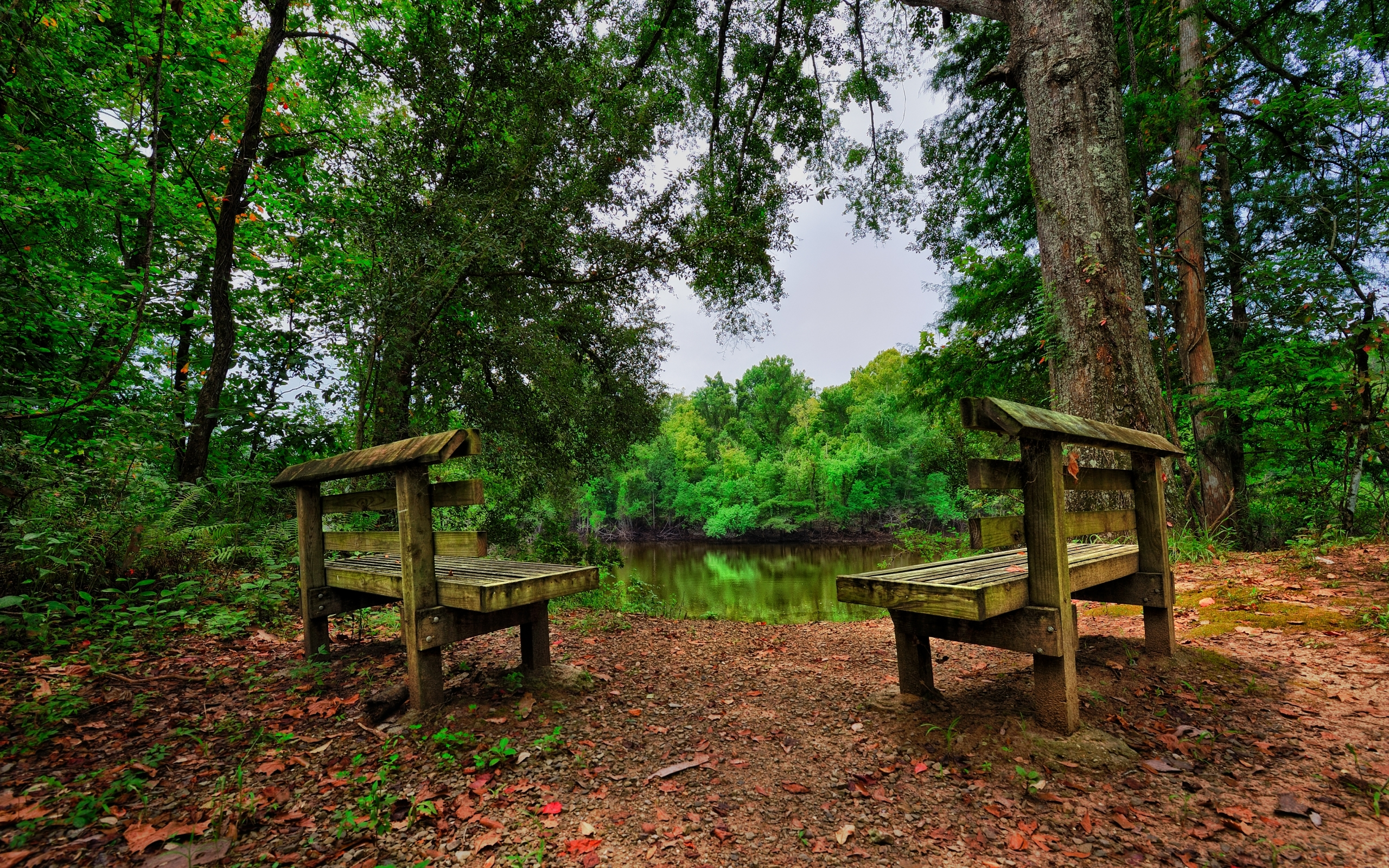 Fall Wooded Wallpaper Bench Hd Wallpaper Background Image 2560x1600 Id