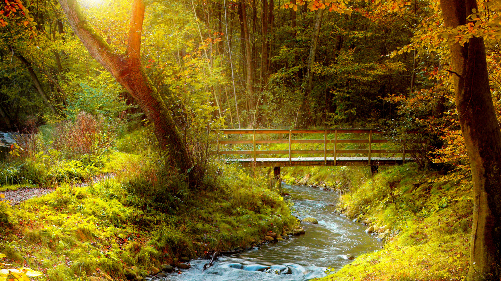 Iphone 6 Wallpaper Fall Leaves Bridge Full Hd Wallpaper And Background Image 1920x1080