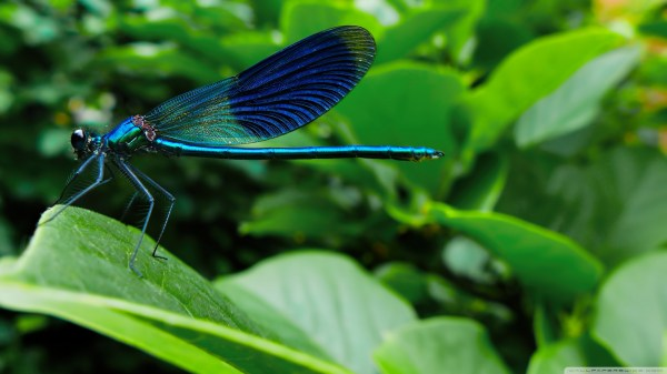 Dragonfly Hd Wallpapers Backgrounds - Wallpaper