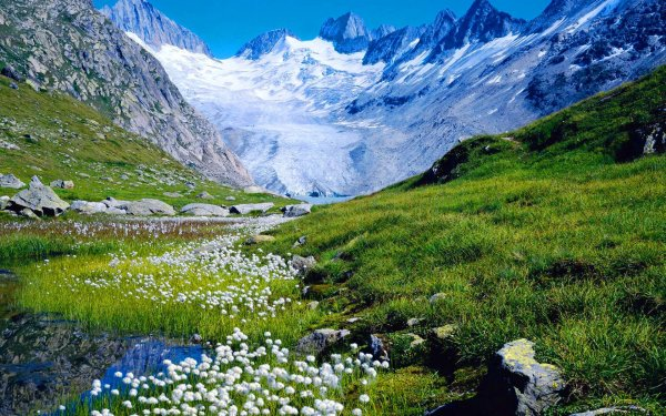mountain flowers in spring hd wallpaper