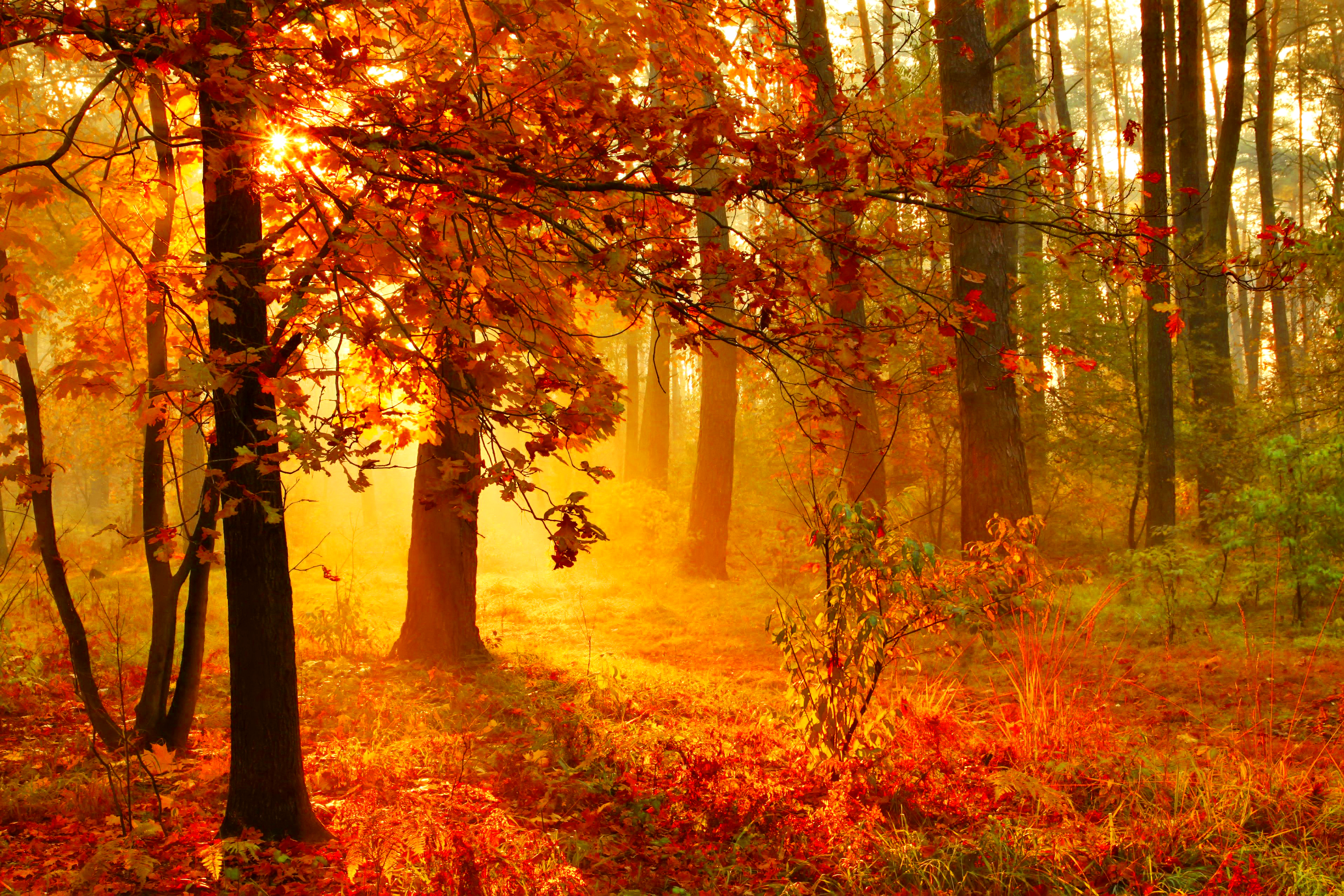 Fall Sunshine Wallpaper Sunset In Misty Autumn Forest Hd Wallpaper Background