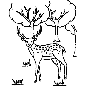 Can you colour this picture for my reindeer colouring