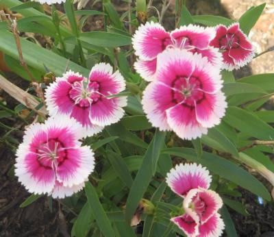 Flower - Flowers Photo (32600645) - Fanpop