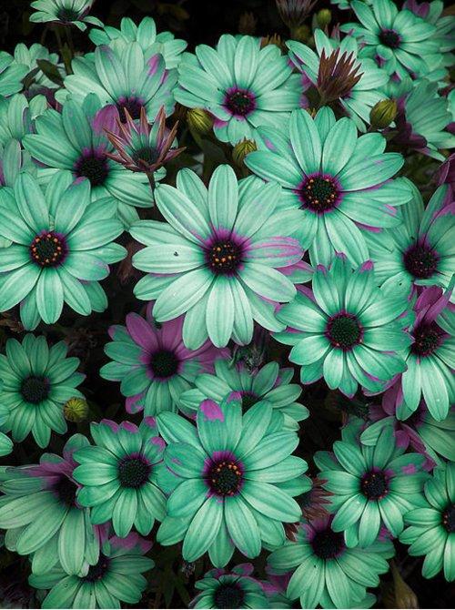 flowerstumblr  Flowers Photo 33623855  Fanpop