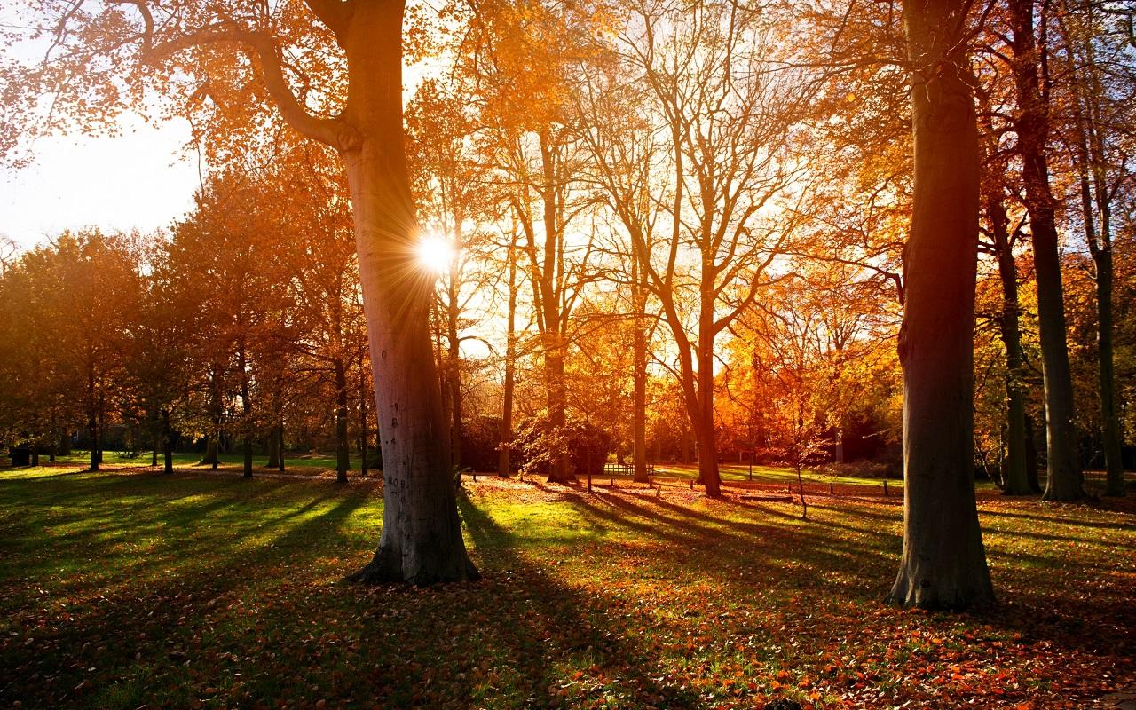4k Central Park In The Fall Wallpaper 秋を感じるおしゃれな壁紙まとめ Naver まとめ
