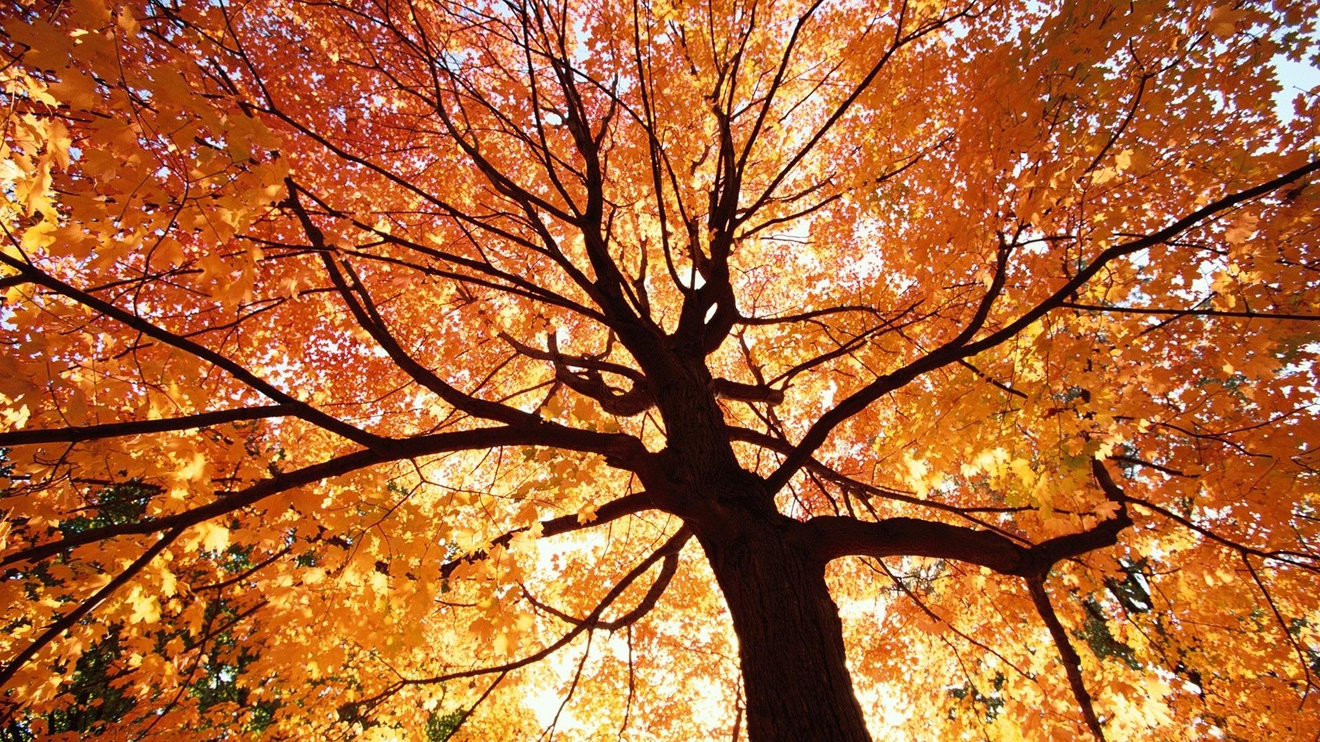 Fall Leaves Wallpaper Windows 7 Autumn Scenery Random Photo 35926740 Fanpop