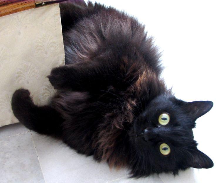 Cute Fall Leaves Wallpaper Beautiful Black Cat Cats Photo 36249786 Fanpop