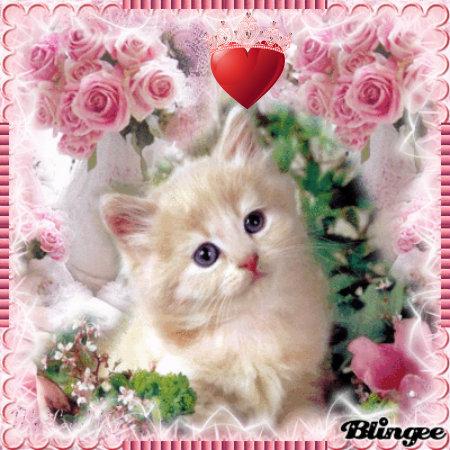 Cute Siamese Kittens Wallpaper Love Cat Kittens Fan Art 36365335 Fanpop
