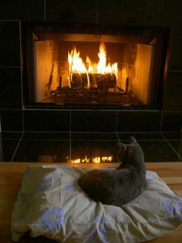 Cats images Cats Sitting By The Fireplace wallpaper photos ...