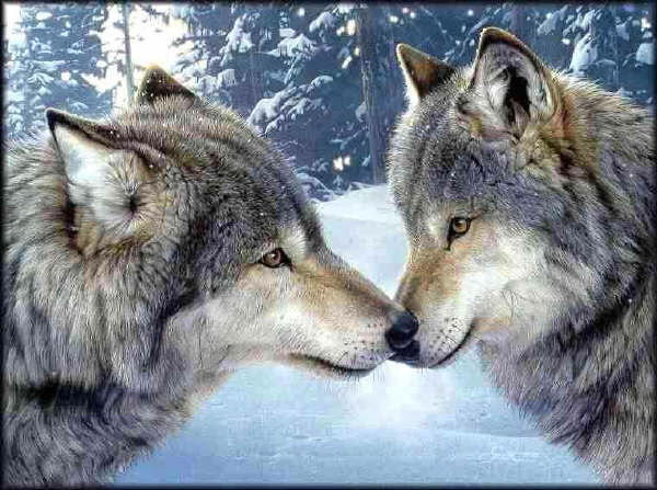 cute mates amazing wolves
