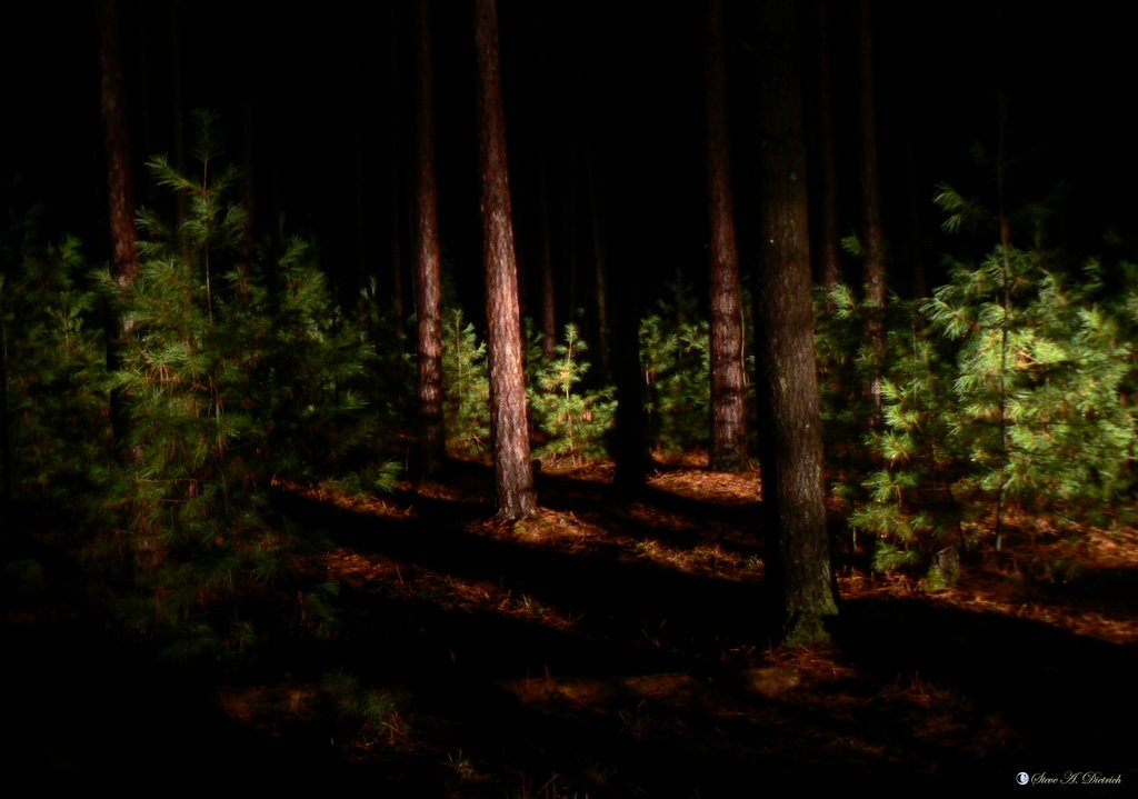 night forest mother nature