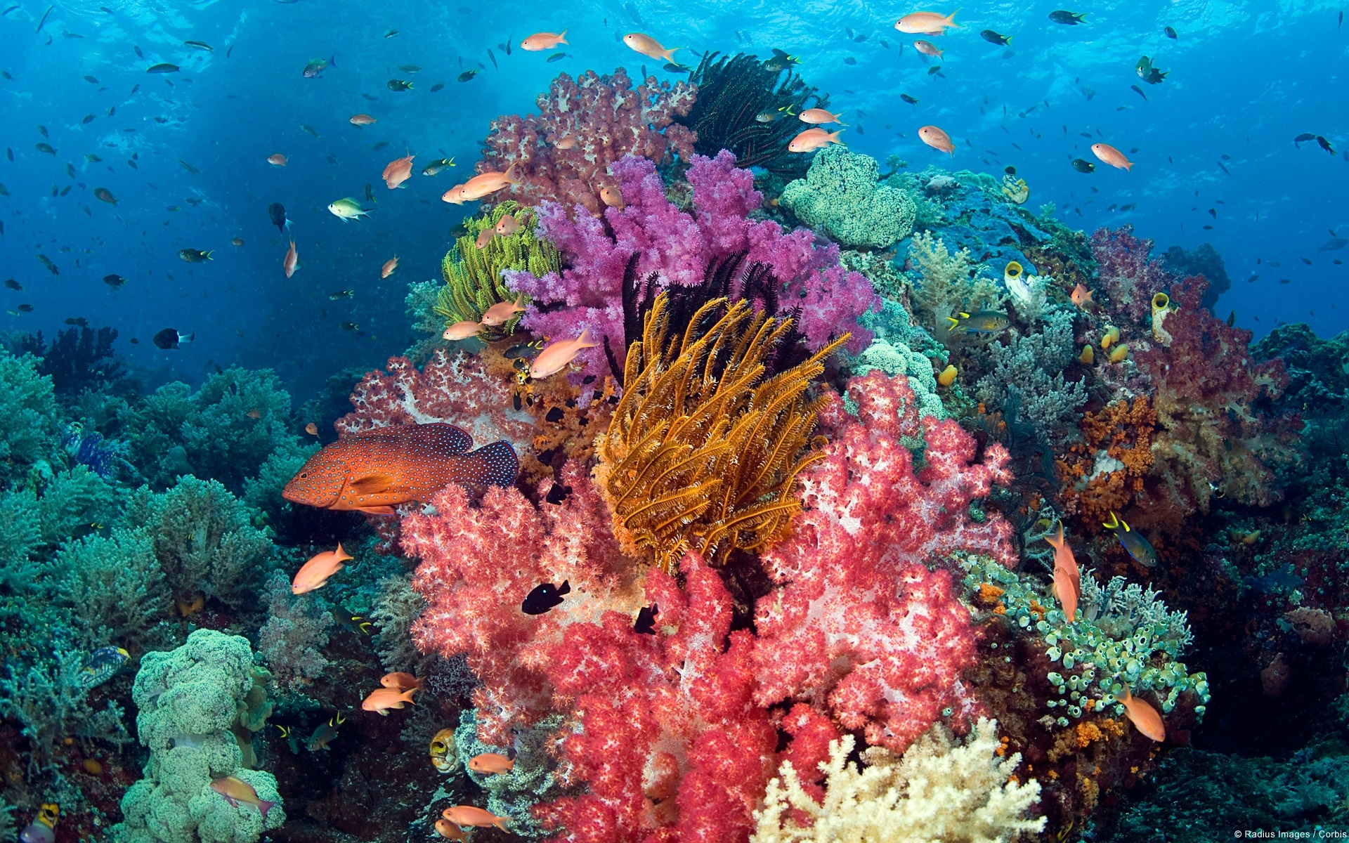 Sample Pictures images Coral Reef HD wallpaper and ...