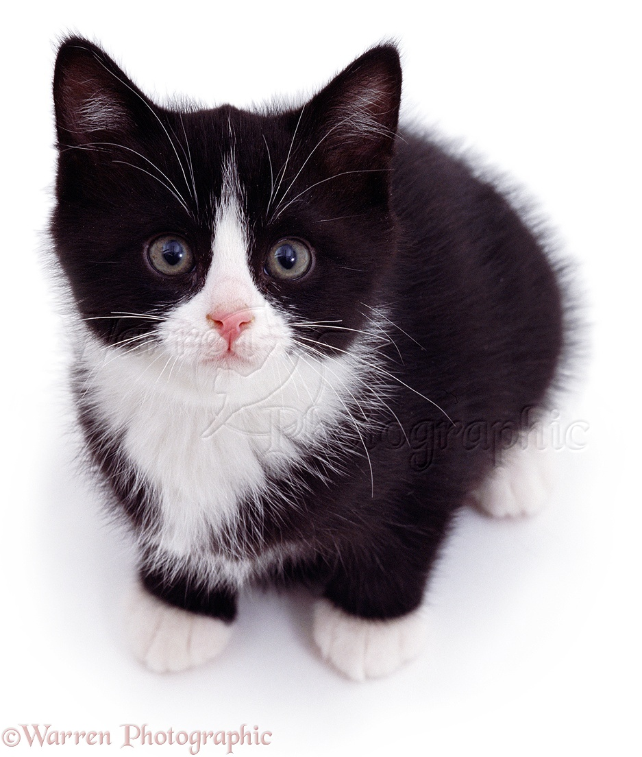 very cute black and