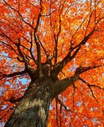 Autumn Orange Aesthetic 🧡 Autumn Photo 43499669 Fanpop