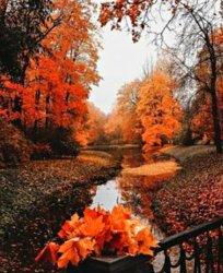 Autumn orange Aesthetic 🧡 Autumn photo 43499670 fanpop