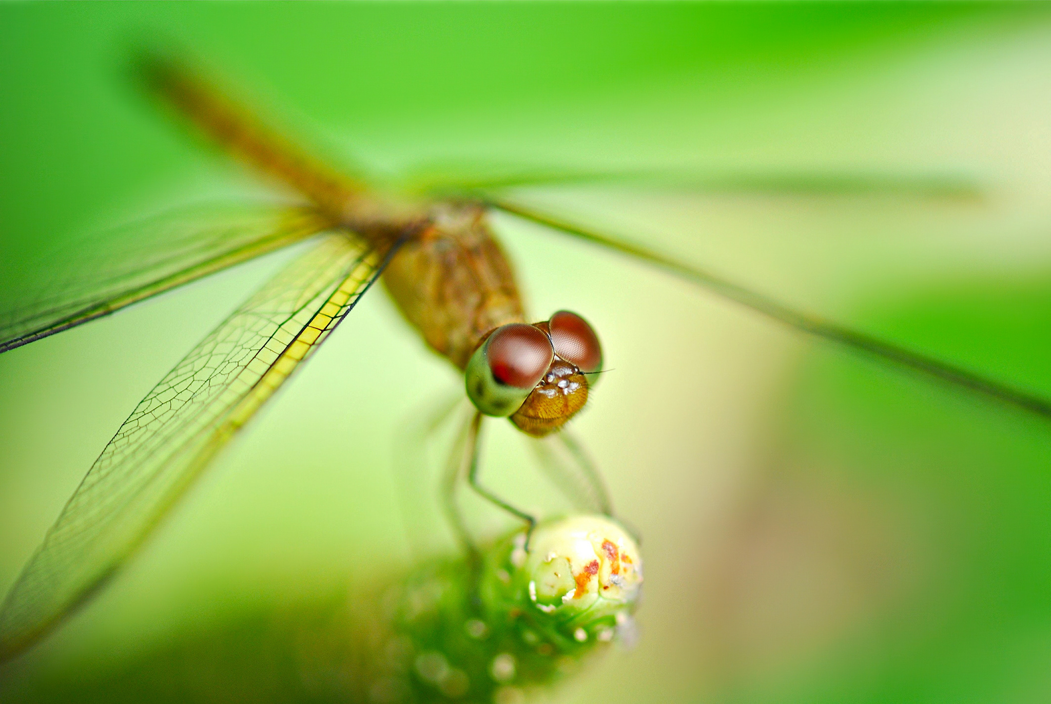 dragonfly full hd wallpaper and background | 2048x1371 | id:407176