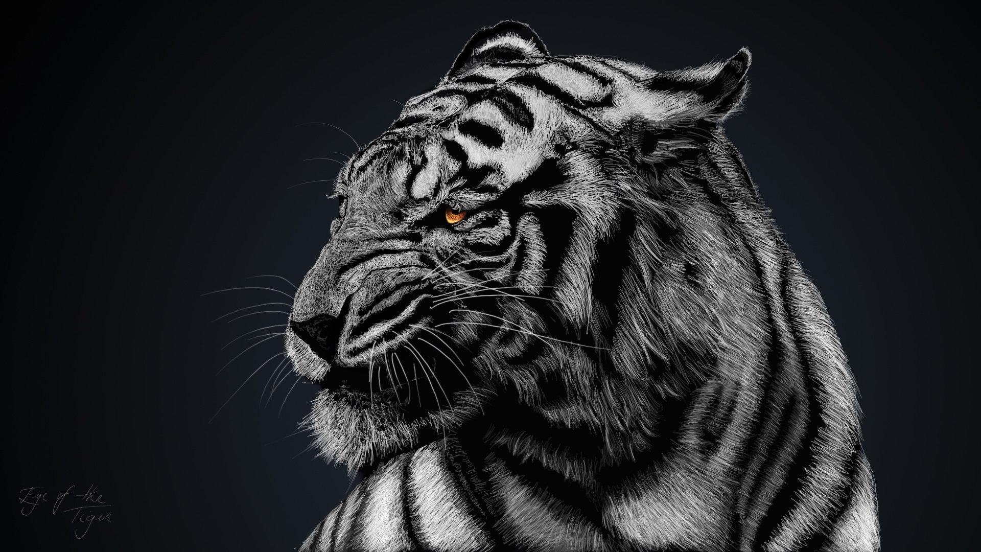 257 white tiger hd
