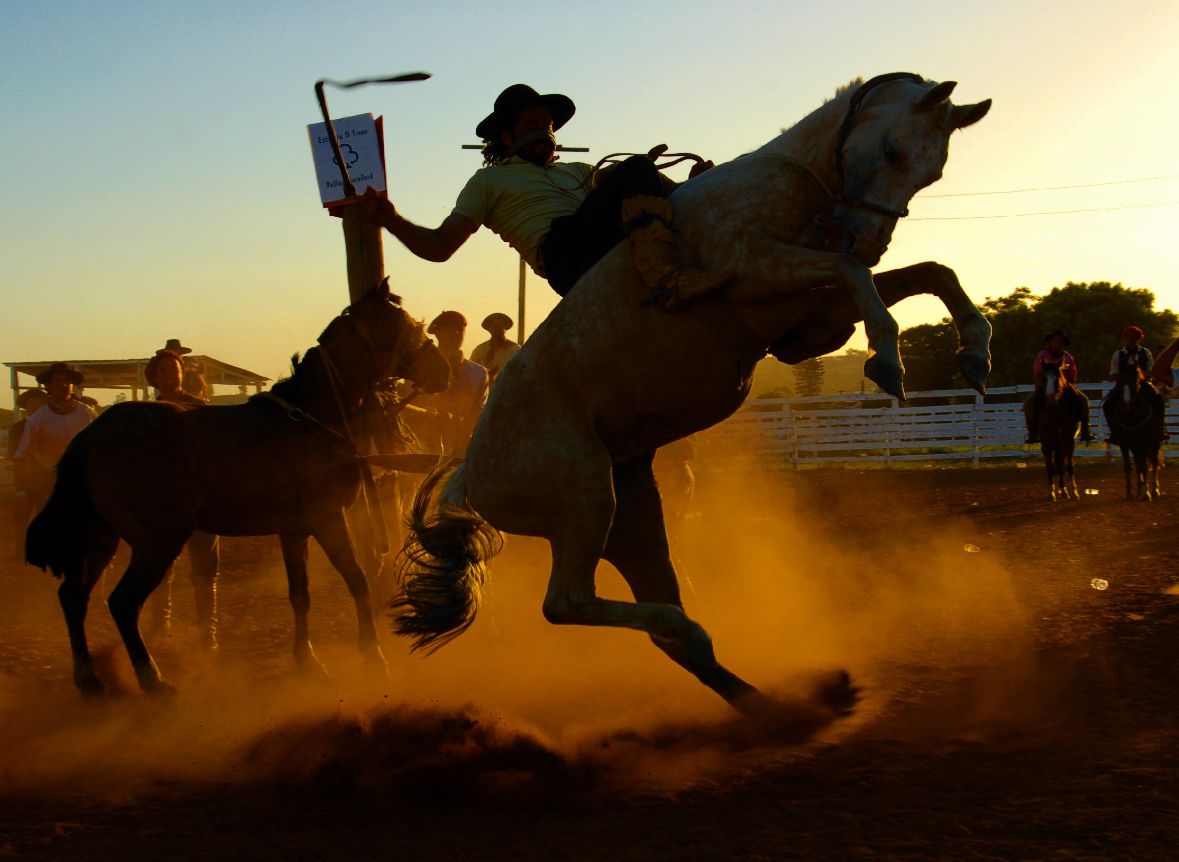 Horse Riding Wallpaper Hd 16 Rodeo Hd Wallpapers Background Images Wallpaper Abyss