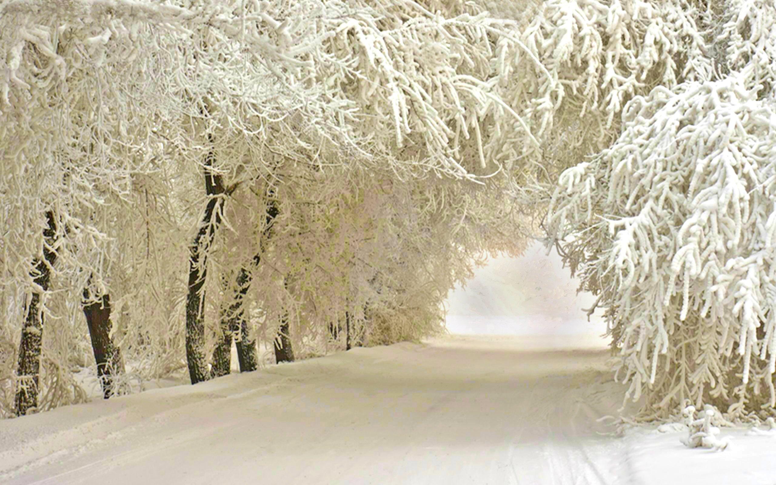 Iphone 5 Falling Snow Wallpaper Winter 03 Wonderland Road 15februari2015sunday 012847