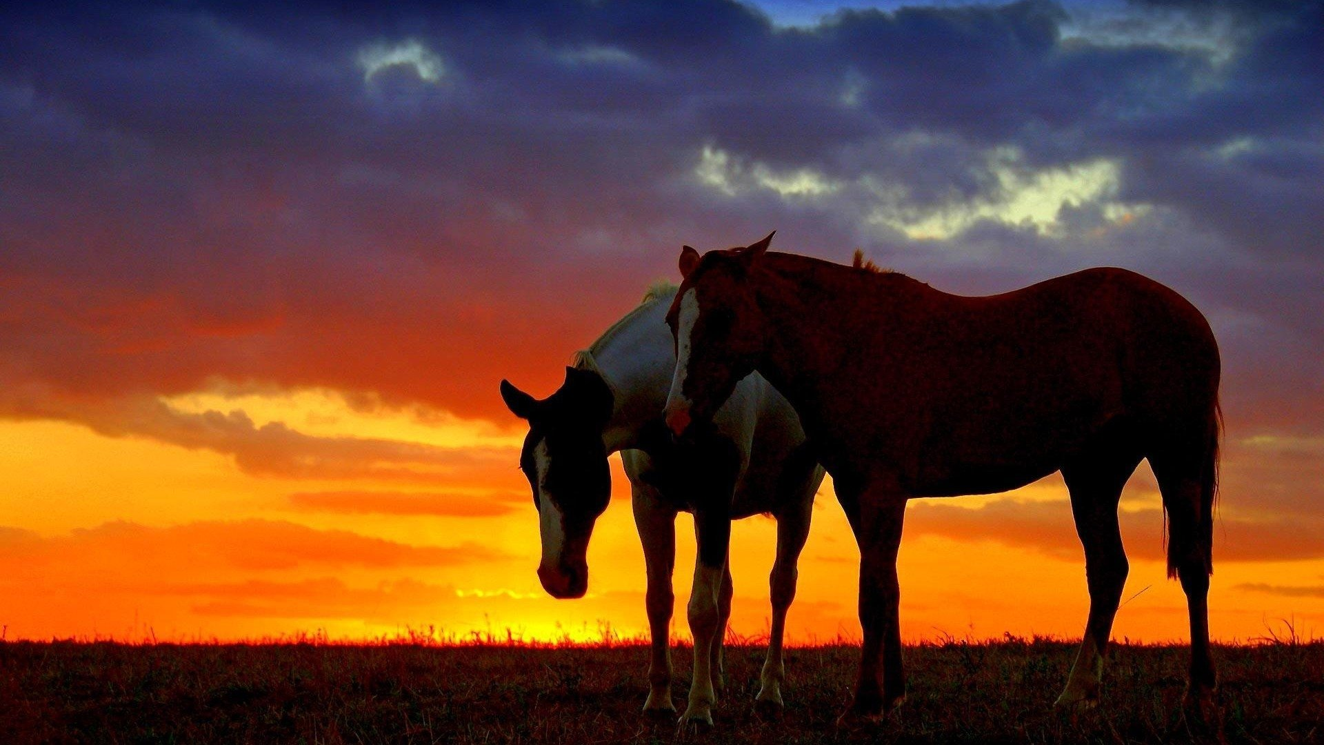 Mustang Wallpaper Iphone X Horses In The Sunset Hd Wallpaper Hintergrund