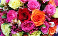 Colorful Roses HD Wallpaper   Background Image   2100x1312 ...