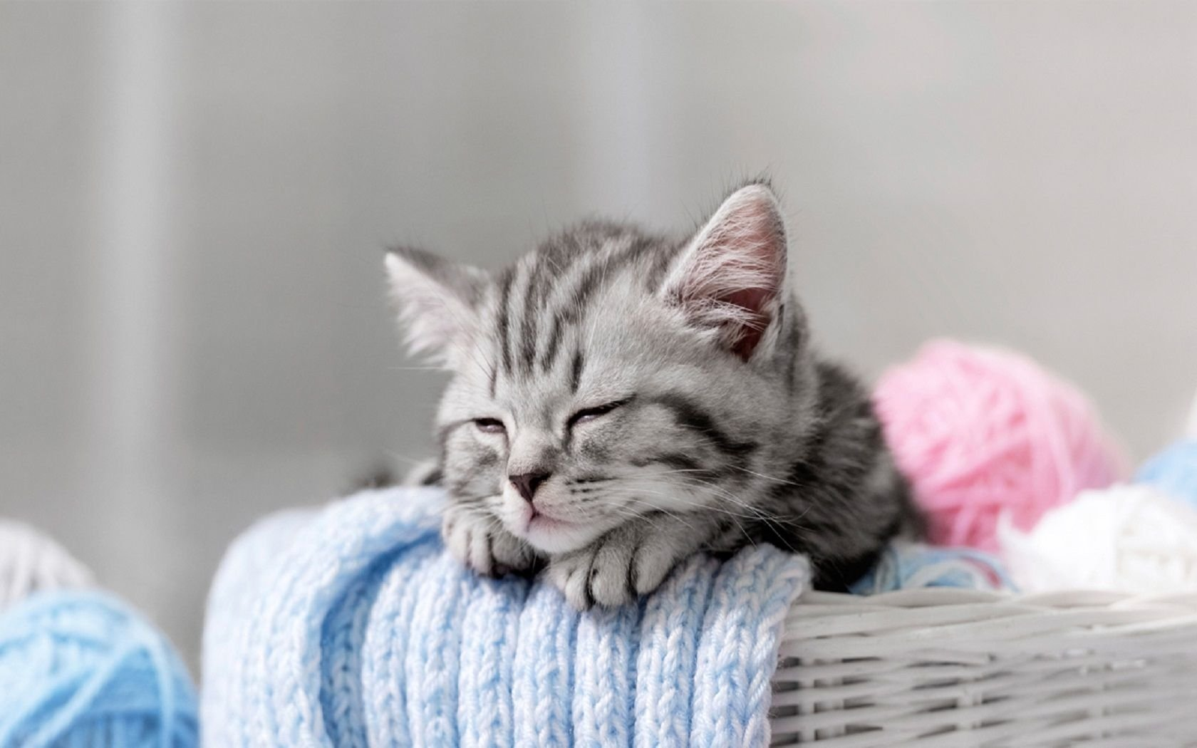 Cute Kittens Wallpaper For Iphone Sleepy Kitten Wallpaper And Background Image 1680x1050
