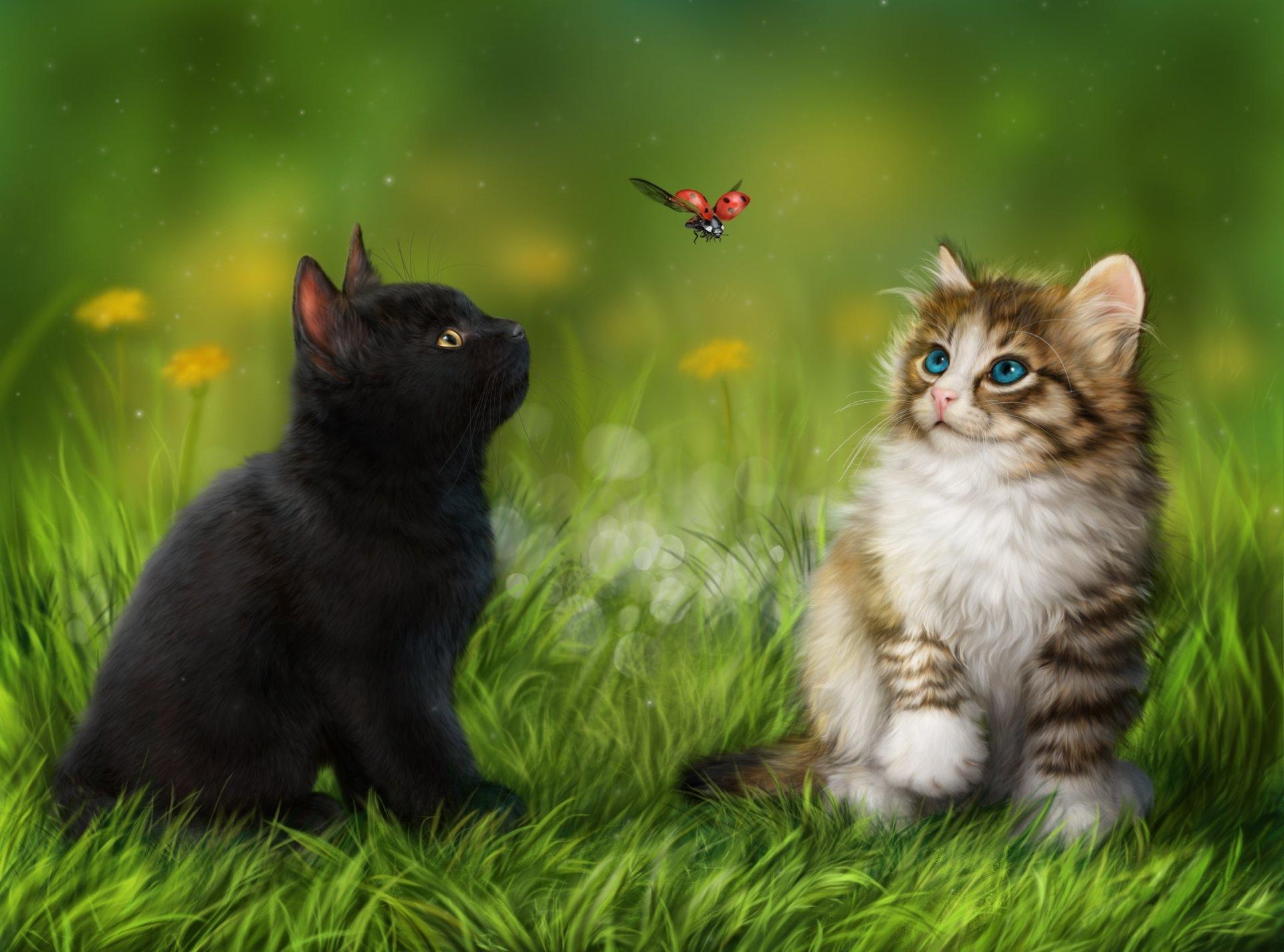 Cute Kittens Wallpaper For Iphone Cute Kittens In The Grass Fond D 233 Cran Hd Arri 232 Re Plan