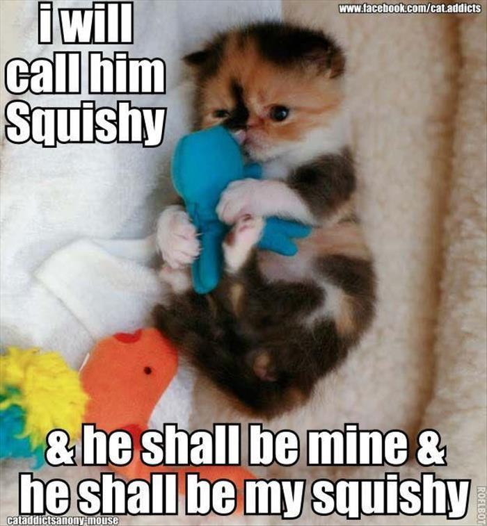the cuteness meme by