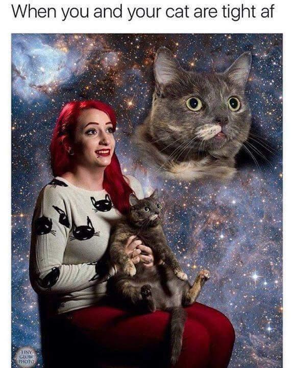 Im Hard Meme : Kitties,, C-c-c-cocaine, Memedroid