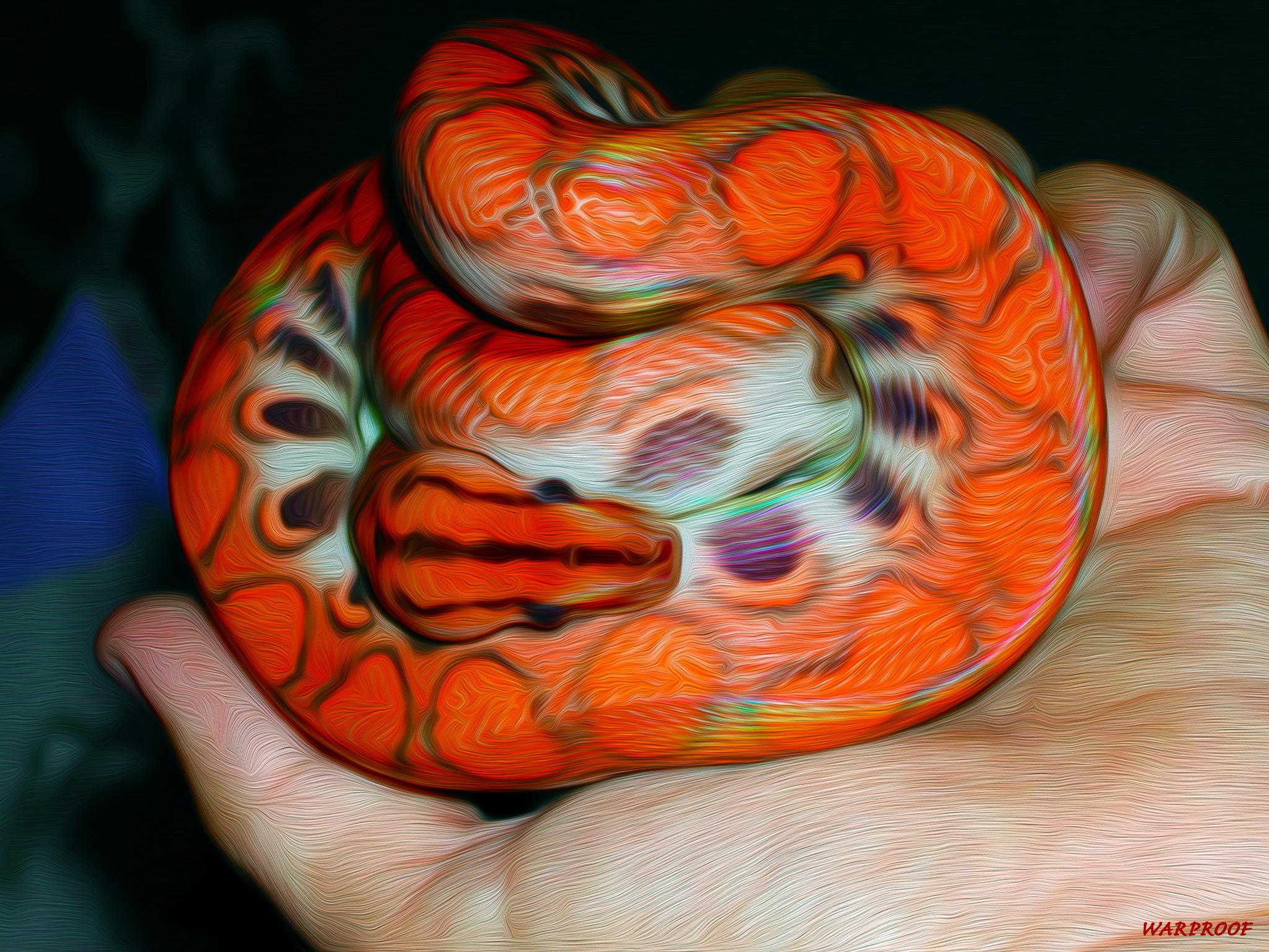 Cute Snake Hd Wallpaper Rainbow Boa Full Hd Wallpaper And Background Image